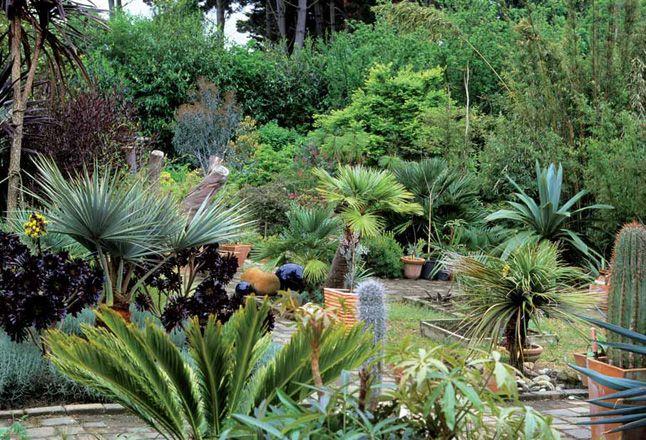Jardin exotique jardin pinterest for Jardin exotique