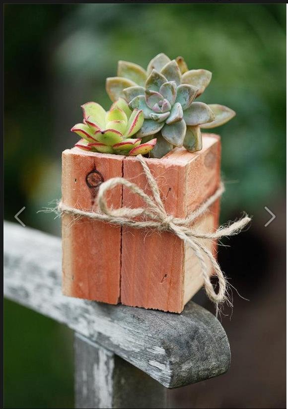 Small nursery arrangement : Small succulent arrangements
