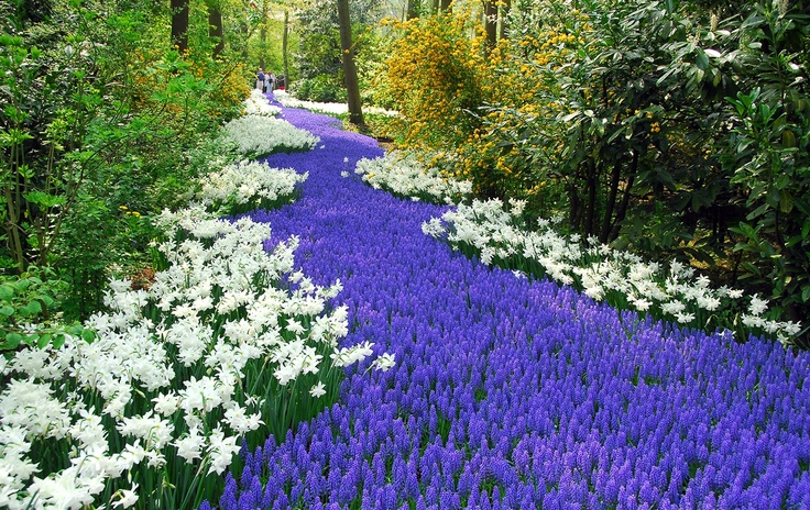 a blue river made of flowers