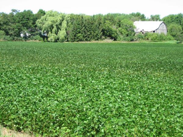 fertile land - photo #14