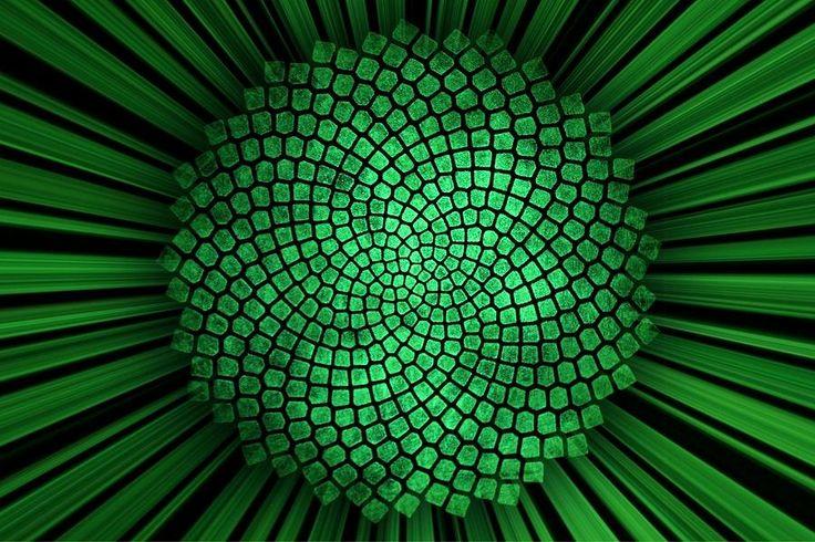 fibonacci sunflower my favorite colors pinterest