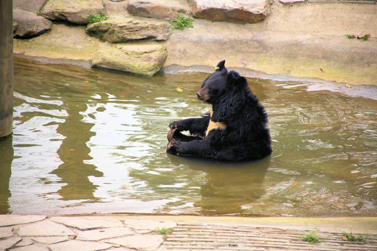 Photographing the Moon Bears of China | PhotoBox Blog | http://blog.photobox.co.uk/photographing-moon-bears-china