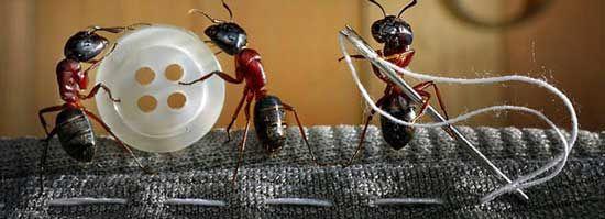 Как бороться с муравьями в доме