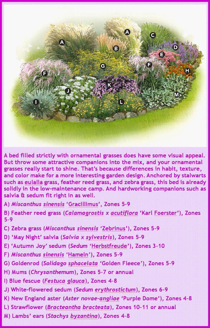 Ornamental grasses garden plan ornamental grasses dry for Ornamental grasses design plans