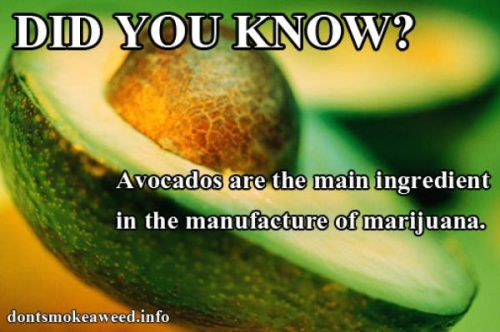 everyone should look at the OG pin for this, the convo is very funny. Pinner said 'the avocado is what makes the green stuff' lolz. Gotta love nonsmokers and their weed facts.