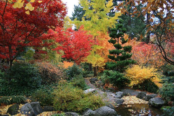 Japanese Maple Garden Gorgeous Gardening Pinterest