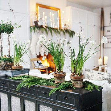 Forcing bulbs for Christmas Decorating with Paperwhites Step by step instructions and ideas