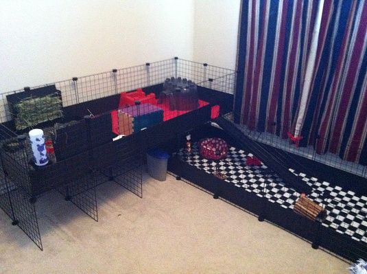cool guinea pig cage olivia 39 s stuff pinterest