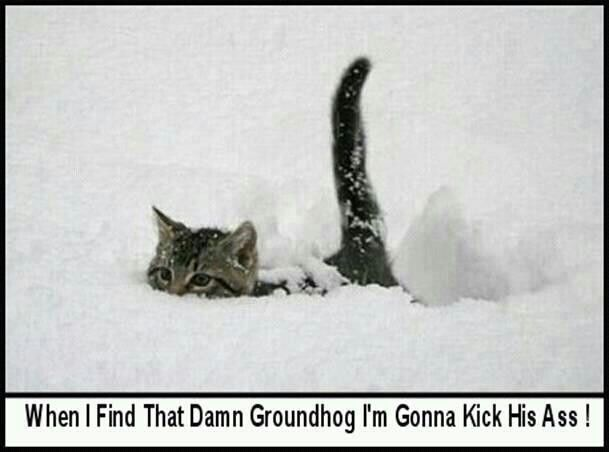 When I find that damn groundhog I'm gonna kick his ass!