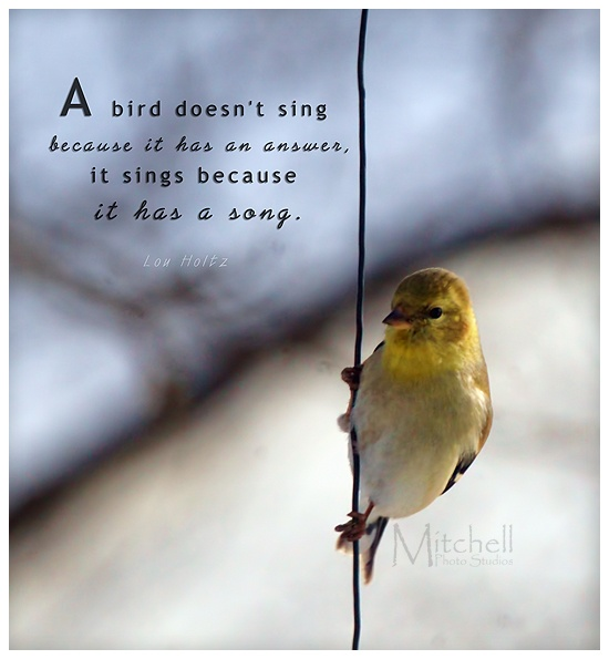 Quotes About Our Backyard :  on the feeder wire outside my window I added a quote I found online