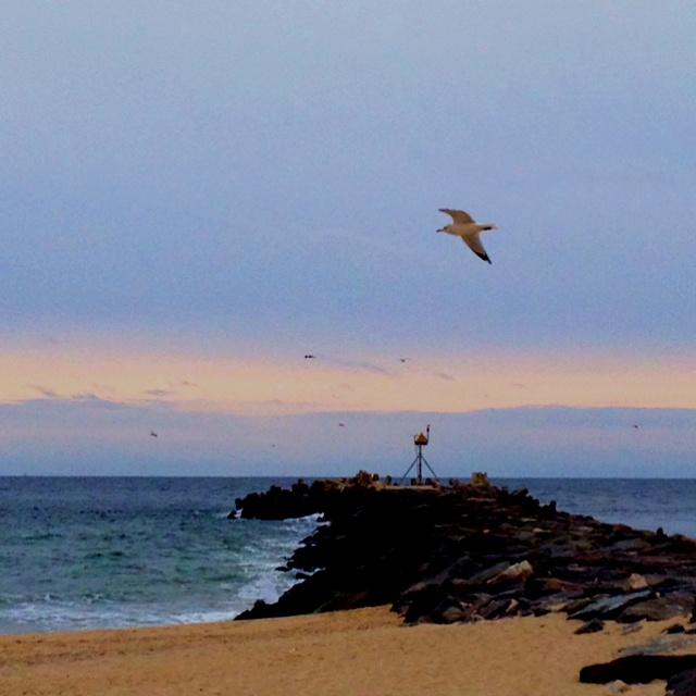 Manasquan inlet nj favorite places spaces pinterest for Manasquan inlet fishing