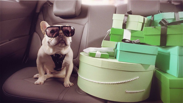 With your pup in the backseat, your shopping trip can't get better. #Chevrolet #Spark