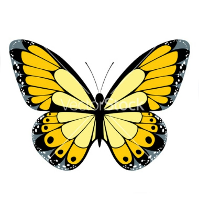 Yellow butterfly yellow butterflies pinterest