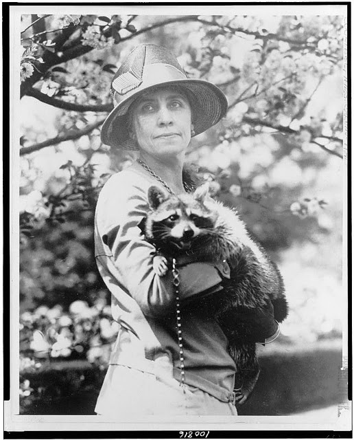 """The Coolidge family owned """"first racoons"""" Horace and Rebecca."""