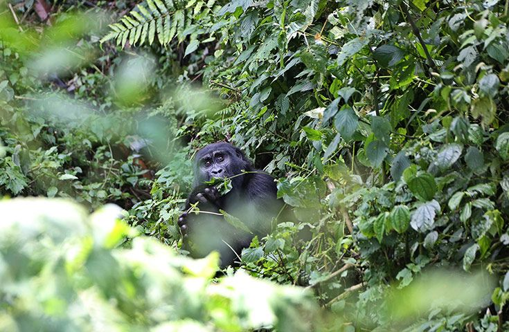 Bwindi Impenetrable national park Uganda posti più belli del mondo edreams blog di viaggi