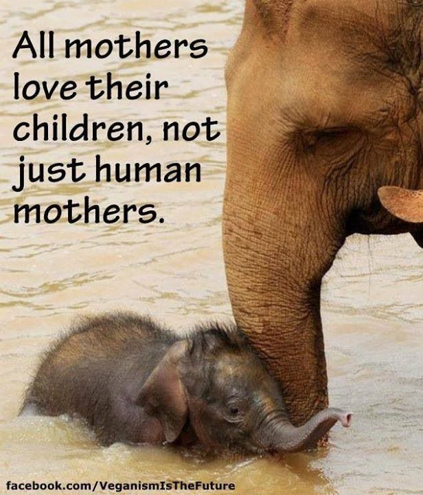 Stop poaching. Do not buy ivory.   The Earths Gentle ...