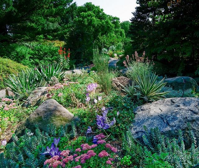 Rock/Zone 5 garden