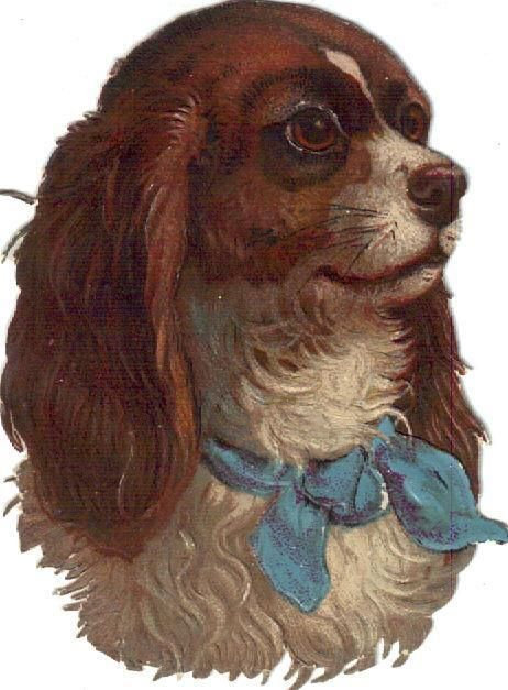 Spaniel Dog in Blue Bow C1880