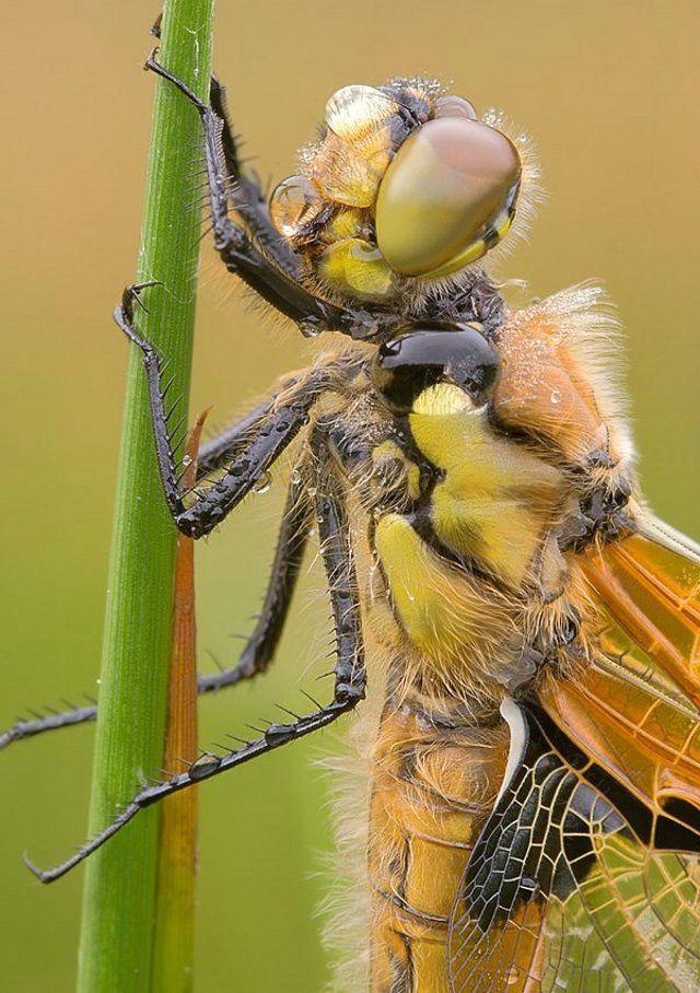 Fantastični insekti - Page 7 6e95da3c017296a838940b55b31076ab