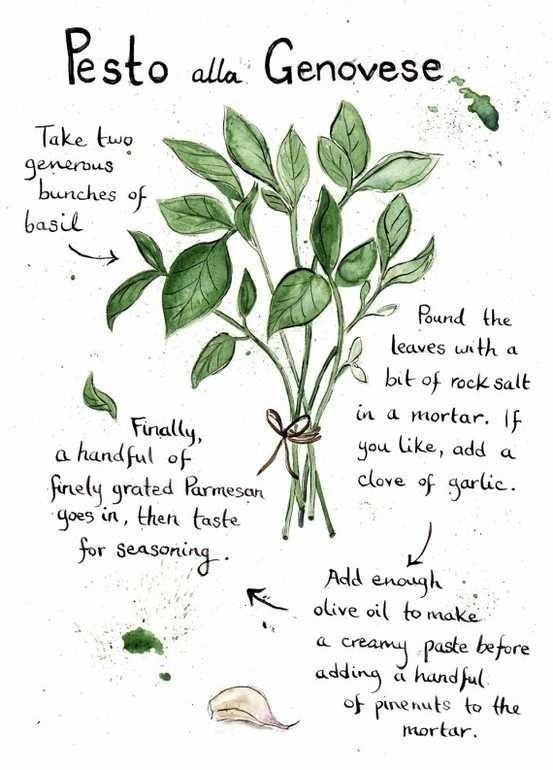 Pesto Alla Genovese Ilustrated Recipe | Everything else. | Pinterest