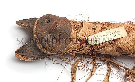 body found in jefferson davis county