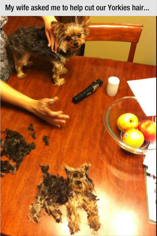 funny dog, wife asked me to help cut the dog's hair