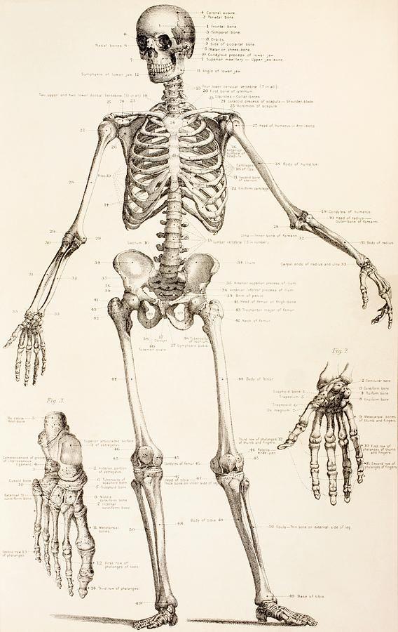 master thesis skeleton