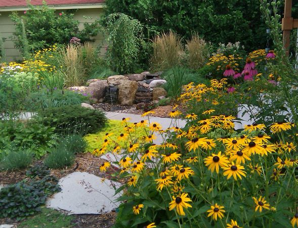 Texas Native Plants Drought Tolerant Texas Native