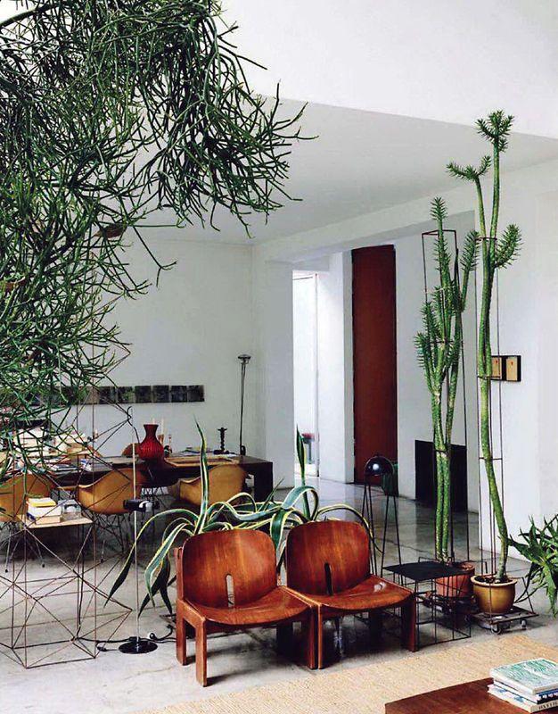 Modern house plants - Nouvelle tendance deco ...