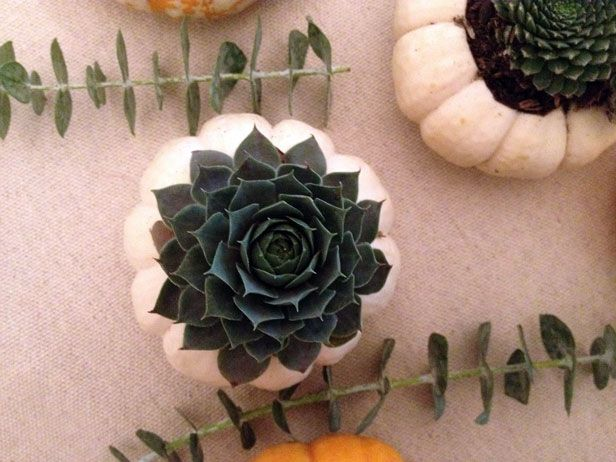 DIY Pumpkin Planter With Succulents