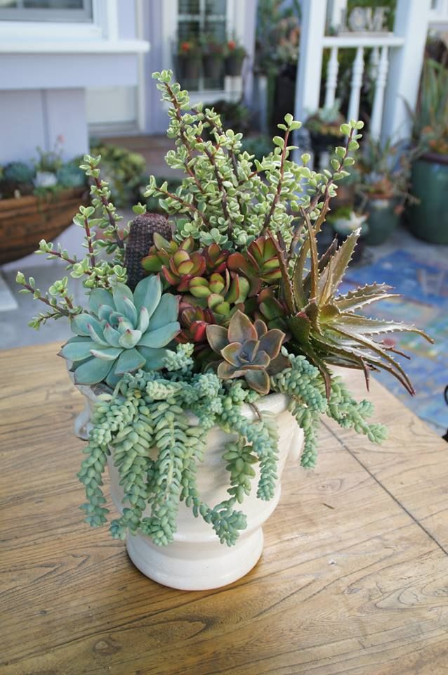From simply succulent container gardening pinterest - How to make a succulent container garden ...