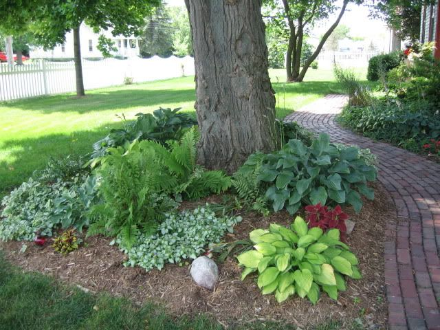 Plants for island outdoors pinterest for Planting trees landscaping