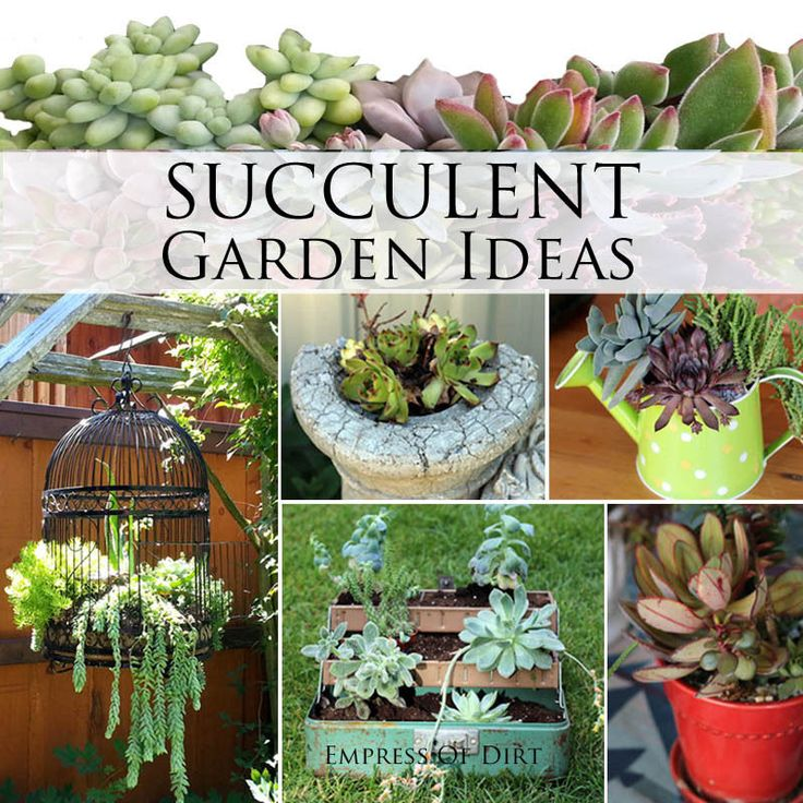 Succulent Garden Designs Home Design Ideas