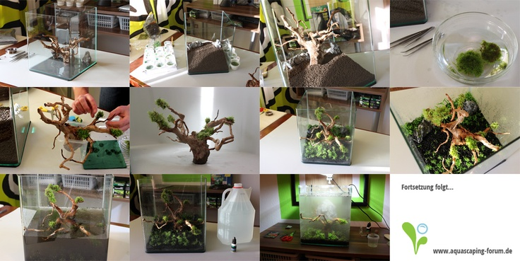 Pin by Aquascaping Community on Aquascaping Pinterest