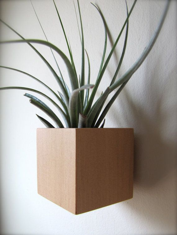 Hanging Wall Plant Holder Planter For A Succulent Cactus