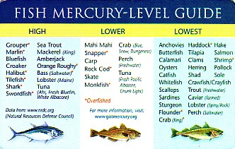 Fish mercury level guide for Fish with high mercury content