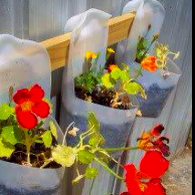 Garden craft ideas on pinterest photograph recycled garden for Recycled garden ideas pinterest