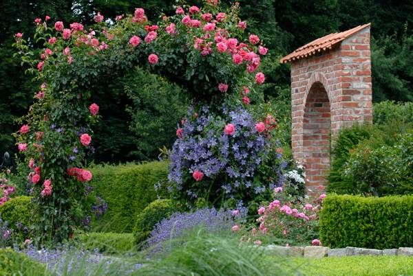 Flower carpet pink trained on a trellis with clematis growing along