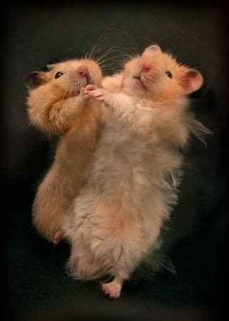 """""""Hamster Dance"""""""