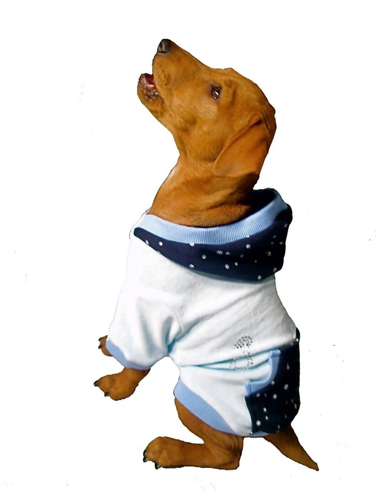 20 off sky paw velour hoody from puchi petwear uk pet clothing store