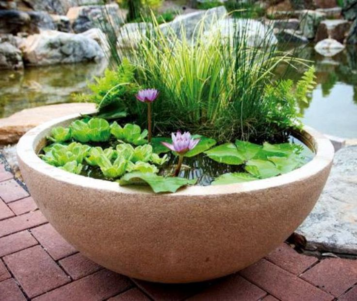 Container water garden garden pinterest - Small water gardens in containers ...