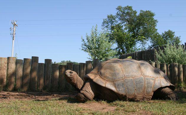 Reptile Gardens South Dakota God 39 S Creatures Pinterest