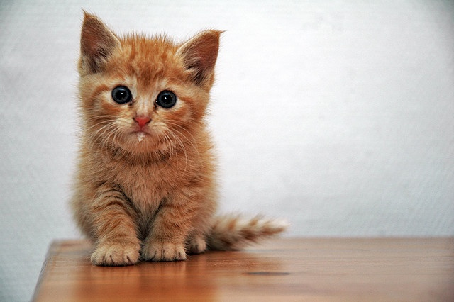 "I just wanted to share this with everyone: it's called ""written? kitten!"" and for every 100 words you write, you get a picture of a kitten. It's awesome. I will definitely try this."