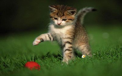 Image result for kittens at play