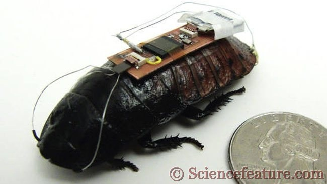 Now, Cockroaches will follow the ways given or provided by humans and will save a large no. of human life. To know more and check out its video go to:  http://www.sciencefeature.com/remote-controlled-cockroach-will-work-to-save-people/