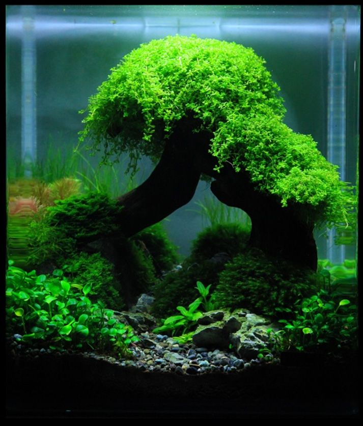 Aquascaping Nature Aquatique Pinterest