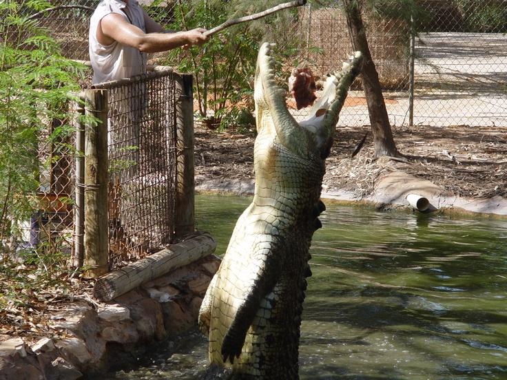 Crocodile sanctuary - broome western australia