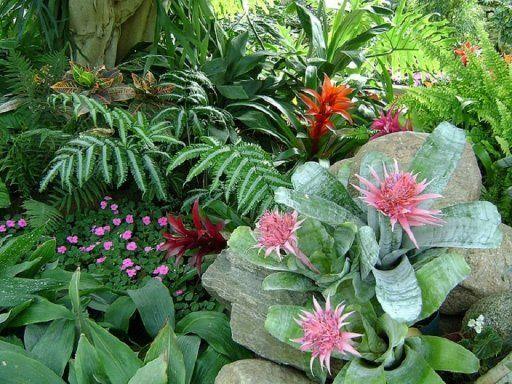 plantas tropicales jardines pinterest