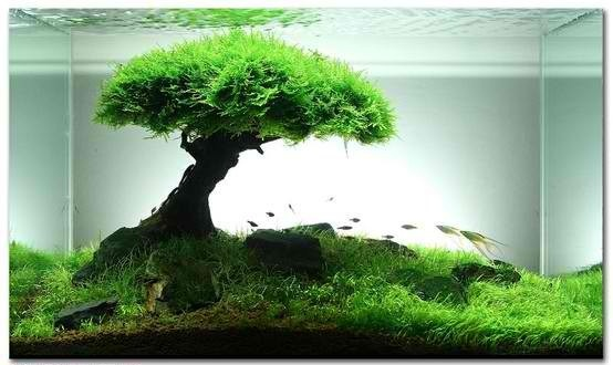 Aquarium Beautiful Fish Pinterest