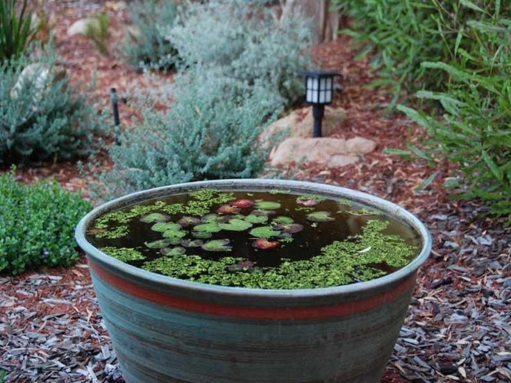 Pond in a pot pond in a pot pinterest for Pot pond ideas